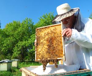 Une ruche dans son jardin for Www jardiner malin fr