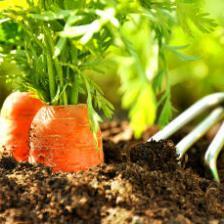 Organic gardening ABCs