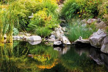 Bassin d 39 ornement plantes du jardin et de la maison forum du jardin et du jardinage - Plantes aquatiques pour petit bassin ...