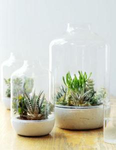 Succulentes des plantes d 39 int rieur faciles et d coratives - Plante d interieur facile d entretien ...