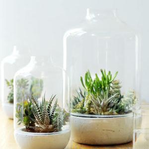 succulentes des plantes d 39 int rieur faciles et d coratives