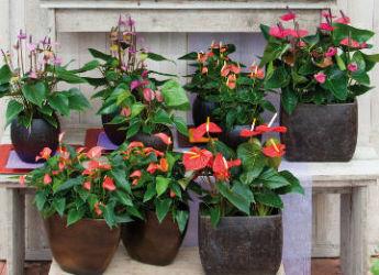 Plantes d 39 int rieur entretien pendant l 39 hiver for Plante interieur pendante