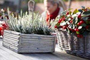 Plantes vertes pour balcon et terrasse en hiver for Jardiniere balcon hiver