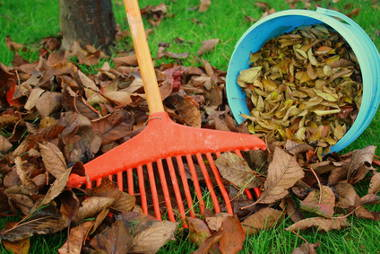 Use dead leaves to fertilize and protect plants