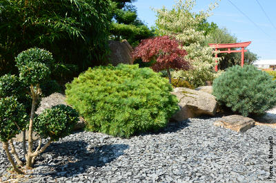 Cam lia feuilles jaunissent arbres arbustes et rosiers forum du jardin et du jardinage - Feuille d ardoise a coller ...