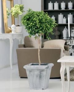Plante pour appartement - Plante d appartement originale ...