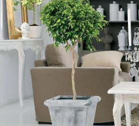 Des plantes faciles de culture pour un int rieur sain - Plante interieur facile entretien ...