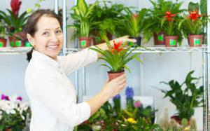 plantesinterieurfleurhiver