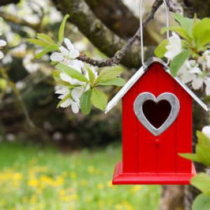 jardinage en f vrier travaux et conseils. Black Bedroom Furniture Sets. Home Design Ideas