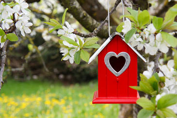 Jardinage en f vrier travaux et conseils for Jardinage conseil