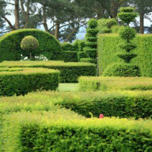 le buis pour un jardin ou une terrasse toujours chic. Black Bedroom Furniture Sets. Home Design Ideas
