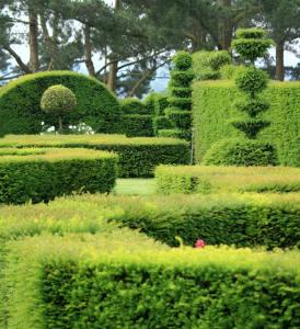 Le buis pour un jardin ou une terrasse toujours chic - Jardin topiaire ...