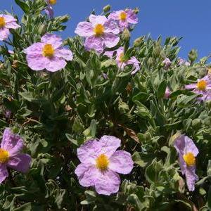 Arbuste a fleur for Www jardiner malin fr