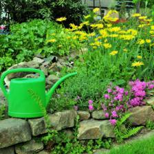 jardinage en mai
