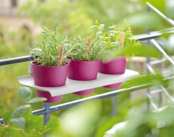 plante aromatique potager l gumes plantes aromatiques forum du jardin et du jardinage. Black Bedroom Furniture Sets. Home Design Ideas