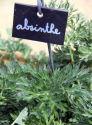 absinthe culture