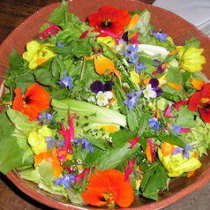 fleurs comestibles cultiver pour vos plats et salades. Black Bedroom Furniture Sets. Home Design Ideas