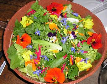 Fleurs Comestibles A Cultiver Pour Vos Plats Et Salades