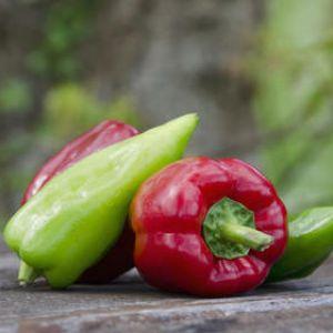 Le poivron est un excellent légume d'été, plus facile à cultiver qu'il n'en  a l'air.