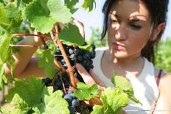 vin bio et biodynamique