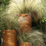 Gramin es des plantes faciles d 39 entretien for Plante 150 maladies madagascar