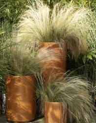 graminee plante