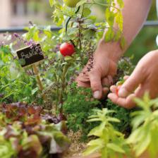 Gardening trends and new fads