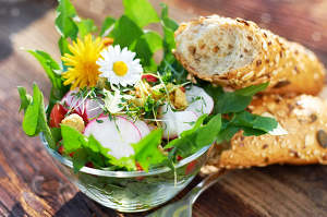 pissenlit cuisine et utilisation