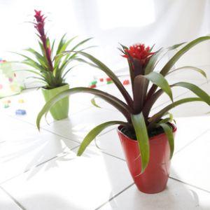 plante verte avec fleur rouge