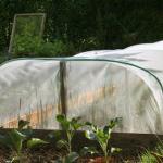 Le jardinage bio c 39 est quoi - Maladie poireau mouche mineuse ...