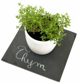 Thym bienfaits et vertus pour la sant - Bouquet garni en cuisine ...