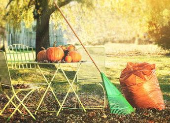 Jardinage en novembre travaux et conseils for Au jardin conseil