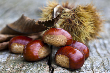 Chestnut health benefits and therapeutic value