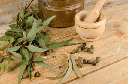 Eucalyptus health benefits and therapeutic value