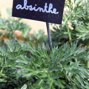 ou planter absinthe