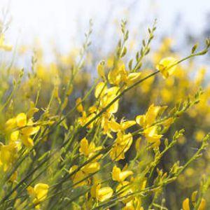 Gen t plantation taille et conseils d 39 entretien - Taille du pecher au printemps ...