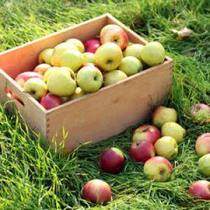 Conserver les pommes techniques de conservation - Conserver pommes coupees ...