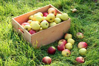 Conserver les pommes en hiver