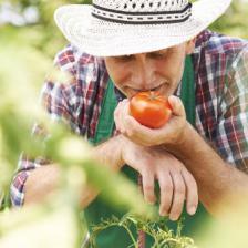 Enjoying tomatoes in the garden