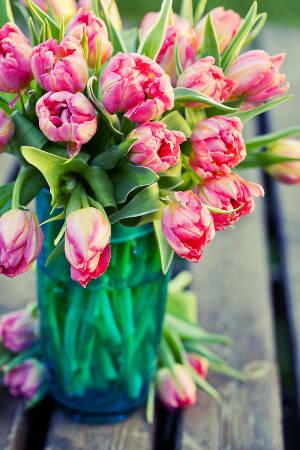 tulipe en pot plantes du jardin et de la maison forum du jardin et du jardinage. Black Bedroom Furniture Sets. Home Design Ideas