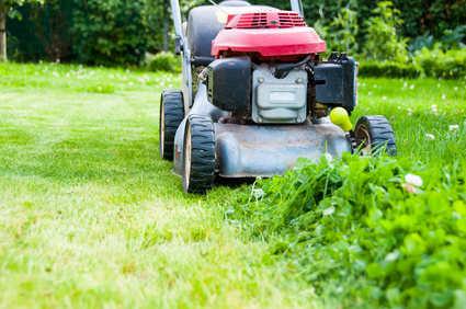 Mauvaise herbe sur gravier / Pelouse, Gazon, Compost et Sols ...