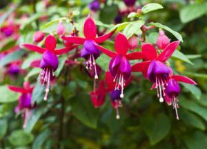 Plantes qui fleurissent l 39 ombre for Plante qui aime l ombre