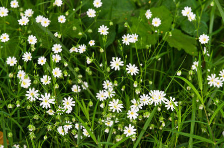 Weeds that are full of benefits