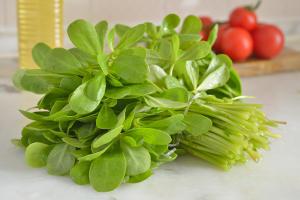 Pourpier semis culture r colte et conseils d 39 entretien - Salade a couper qui repousse ...