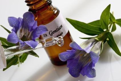 Gentiana health benefits and therapeutic value