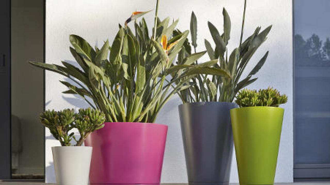 Quelle Plante En Pot Pour Terrasse jardin en pots : idées et conseils