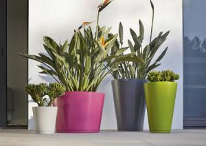 Jardin en pots id es et conseils for Plante decorative jardin