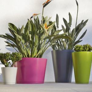 Jardin en pots id es et conseils - Conseils jardinage pour les plantes en pots ...