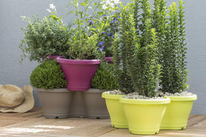 plante pot terrasse
