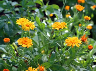 Souci Semis Et Entretien Des Fleurs Au Fil Des Saisons